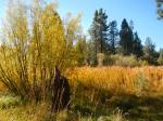 Autumnal gold in wetland swales.