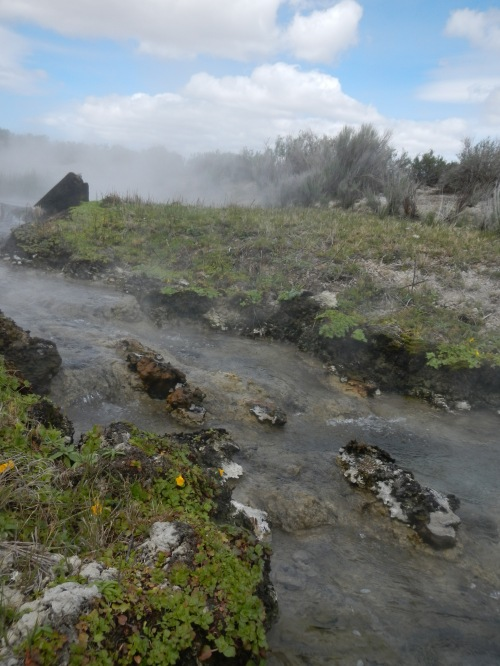 Geothermal action in Surprise Valley.